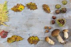 Frontera decorativa del otoño con las castañas, las nueces, las avellanas, las bellotas, los ceps, y las hojas en fondo de madera Foto de archivo