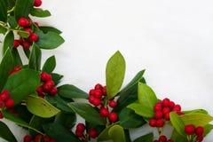 Frontera del acebo de la Navidad Foto de archivo libre de regalías