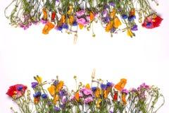 Frontera del capítulo de flores delicadas Amarillo de la primavera, púrpura, flores rosadas en el fondo blanco Fotos de archivo libres de regalías