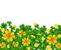 Frontera del día de St Patrick s con verde y tréboles de la hoja del oro cuatro y tres, monedas de oro en el fondo blanco Partido Imagen de archivo libre de regalías