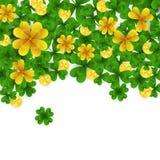 Frontera del día de St Patrick s con verde y tréboles de la hoja del oro cuatro y tres, monedas de oro en el fondo blanco Partido Imagen de archivo