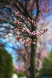Frontera del flor de la primavera con el árbol floreciente rosado Escena hermosa de la naturaleza con las flores en llamarada del imagen de archivo