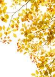 Frontera del follaje de las hojas de otoño Fotos de archivo libres de regalías