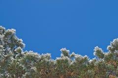 Frontera del invierno Fotografía de archivo