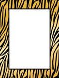 Frontera del leopardo/del tigre Fotografía de archivo