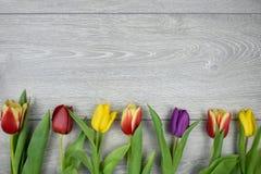 Frontera del marco de la flor Imagen de archivo