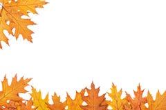 Frontera del otoño Imagen de archivo libre de regalías