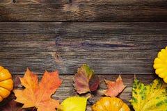 Frontera del otoño con las hojas y las calabazas caidas Fotos de archivo