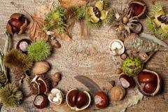 Frontera del otoño con las tuercas Fotos de archivo libres de regalías