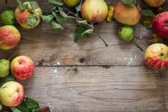 Frontera del otoño de las frutas en la tabla de madera Imagen de archivo