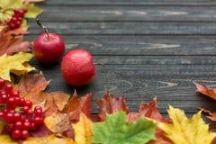 Frontera del otoño del vintage de las hojas y de las frutas caidas en la tabla de madera vieja Fondo otoñal de la acción de graci Fotos de archivo libres de regalías