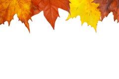 Frontera del otoño Fotografía de archivo