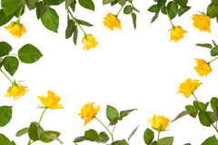 Frontera del papel de la flor de Rose Fotos de archivo libres de regalías