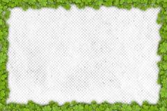 Frontera del trébol en el papel con el lugar para su texto Imagenes de archivo