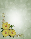 Frontera elegante del diseño de la esquina del hibisco Fotografía de archivo libre de regalías