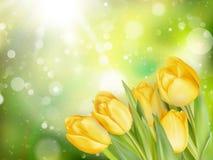 Frontera en colores pastel de los tulipanes de la primavera EPS 10 Fotos de archivo libres de regalías