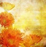 Frontera floral Imágenes de archivo libres de regalías