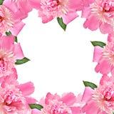 Frontera floral - color de rosa Fotografía de archivo