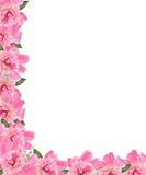 Frontera floral del Peony de Pnk Imágenes de archivo libres de regalías