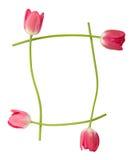 Frontera floral del tulipán Imagen de archivo libre de regalías