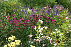 Frontera floral en un jardín inglés. Fotografía de archivo libre de regalías