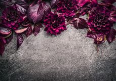Frontera floral púrpura oscura con las flores, el pétalo y las hojas en el fondo gris, visión superior fotografía de archivo libre de regalías