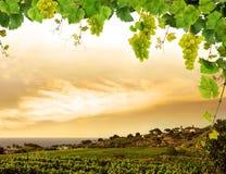 Frontera fresca de la vid con las uvas Imágenes de archivo libres de regalías