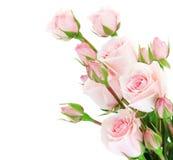 Frontera fresca de las rosas Imagen de archivo