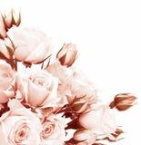 Frontera fresca de las rosas Imagenes de archivo