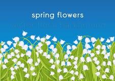Frontera inconsútil con el lirio de los valles de las flores de la primavera, bandera floral, fondo, ejemplo del vector Flores bl libre illustration