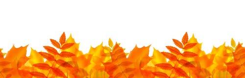 Frontera inconsútil con las hojas de otoño Imagenes de archivo