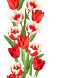 Frontera inconsútil con los tulipanes rojos y blancos Flores, brotes y hojas realistas hermosos Imagen de archivo