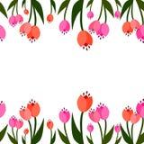 Frontera inconsútil de la primavera Crecimiento de los tulipanes libre illustration