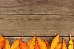 Frontera inferior de las hojas de otoño coloridas en la madera rústica Fotografía de archivo libre de regalías