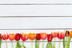 Frontera inferior de tulipanes rojos y anaranjados coloridos Fotos de archivo libres de regalías