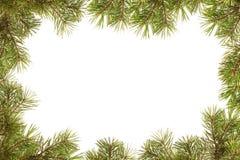Frontera, marco de ramificaciones del árbol de navidad Imagenes de archivo