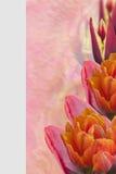 Frontera multicolora de los tulipanes como postal imagenes de archivo