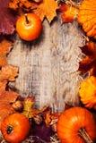 Frontera o marco con las calabazas anaranjadas y colorido de la acción de gracias Fotografía de archivo libre de regalías