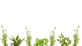 Frontera orgánica de la hierba fotografía de archivo libre de regalías