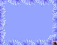 Frontera púrpura de la flor Fotos de archivo libres de regalías
