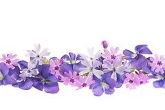 Frontera púrpura de la flor del resorte Imágenes de archivo libres de regalías