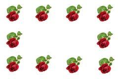 Frontera roja de Rose fotos de archivo libres de regalías