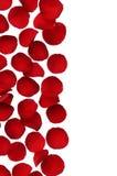 Frontera roja del pétalo color de rosa en el fondo blanco imagen de archivo libre de regalías