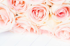 Frontera rosada fresca de las rosas foto de archivo libre de regalías