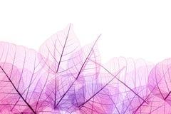 Frontera rosada y púrpura de las hojas transparentes - aisladas en whi Foto de archivo libre de regalías