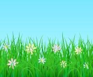 Frontera sin fin horizontal del vector con la hierba verde y las flores ilustración del vector