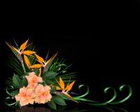 Frontera tropical de las flores en negro Foto de archivo libre de regalías