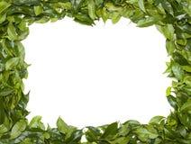 Frontera verde Fotos de archivo libres de regalías