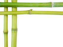 Fronteras de bambú Foto de archivo