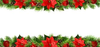 Fronteras de la Navidad con las flores del pionsettia, las ramitas del pino y el de rojos Imagenes de archivo
